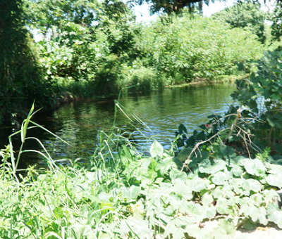 Squatters swimming, dumping waste in your drinking water